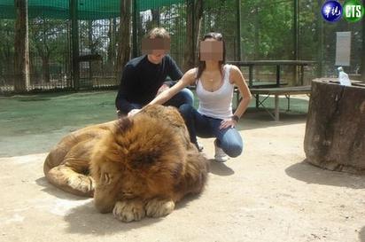 獅子被「撿屍」?! 迷昏強拍照 |