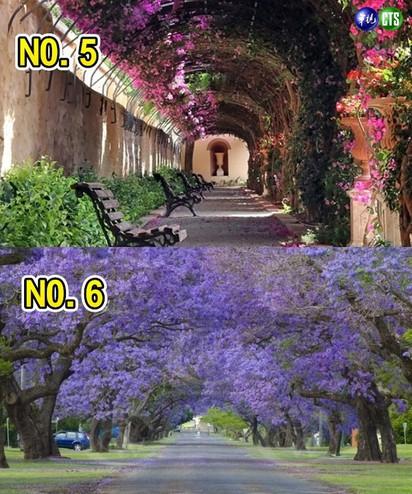 全球最美15條花街 亞洲唯一:台灣 |