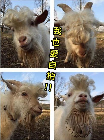你也太像了!羊版陳奕迅 超龐克 |