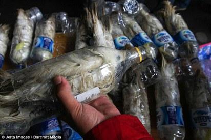 真不是人! 絕種鸚鵡塞進寶特瓶走私   小葵花鳳頭鸚鵡在寶特瓶中奄奄一息