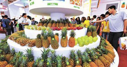 農藥超標7倍 台灣鳳梨登陸卡關 | 大陸福州海峽兩岸經貿交易會展銷台灣鳳梨等農產品