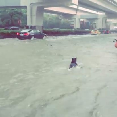 """台北市午後大雨 基隆路變""""河""""   基隆路水淹小腿肚高。"""