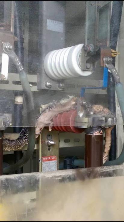 花蓮1工廠有蛇出沒 慘遭高壓電死 | 有民眾表示花蓮1工廠有蛇出沒。