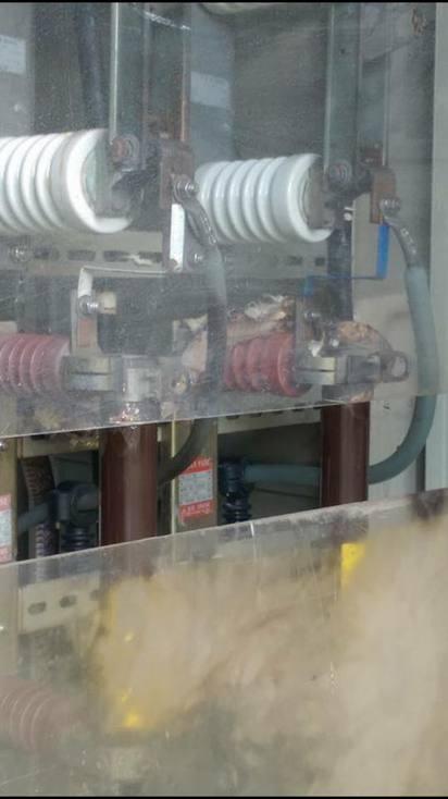 花蓮1工廠有蛇出沒 慘遭高壓電死 | 蛇攀上機台,慘遭高壓電死。