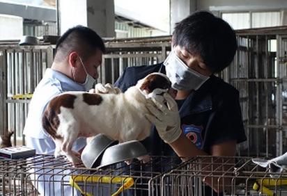 北市破獲首起非法繁殖場 開罰60萬 | 動保處人員檢查犬隻狀況