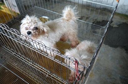 北市破獲首起非法繁殖場 開罰60萬 | 犬隻飼養狀況
