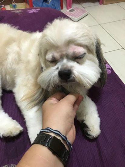 「眼睛旁邊修一下」小狗送回家樣子超悲劇... |