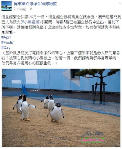 不好笑?! 海生館5企鵝脫逃愚人節玩笑挨批 | 海生館po出警訊,表示有企鵝脫逃,結果是愚人節小玩笑。
