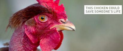 終結貧窮! 比爾蓋茲:不是靠電腦要靠雞 | 比爾蓋茲說解決貧窮要靠雞