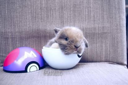 寶貝球裡有萌兔! 網友:好想抓回家   兔兔的萌樣,讓網友噴鼻血!(翻攝Marshall Quinn Boar Rex臉書)