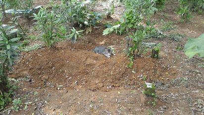 忘不了飼主! 印尼貓天天待墓地守候 | 小貓每天回墓地。
