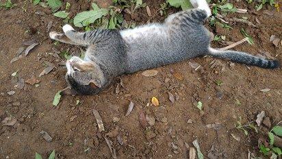 忘不了飼主! 印尼貓天天待墓地守候 | 小貓和過世的飼主感情深厚。