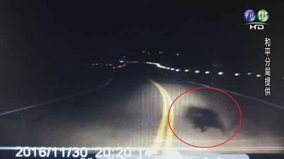 【影】有熊出沒! 台8線上有1大2小台灣黑熊 | 第二隻小台灣黑熊。