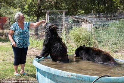 美國嬤與眾不同! 月花萬元養2熊1白虎 | 邦妮阿嬤說,熊喜歡吃甜的。
