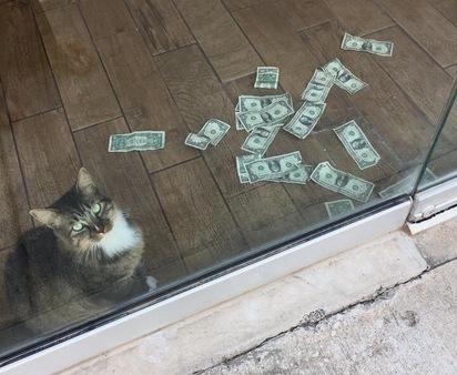 【影】流浪貓變身守財貓 最愛躺在鈔票上滾 | 守財貓(翻攝臉書CASHnip Kitty)
