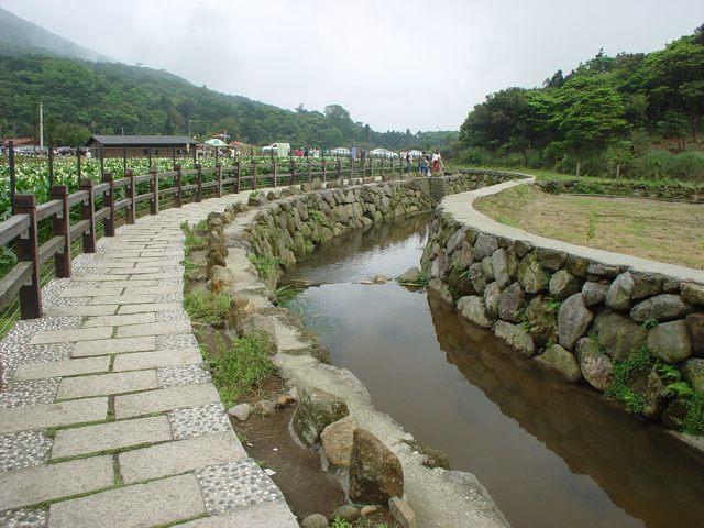 竹子湖海芋季登場 大地處教你這樣輕鬆一日遊 |