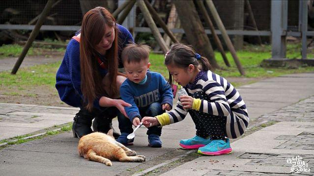 台灣貓 人貓和平共處。(車庫娛樂提供)