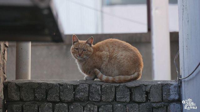 日本貓自在讓韓國貓好生羨慕。(車庫娛樂提供)