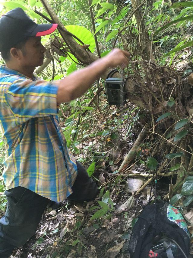 研究人員架設紅外線相機,搜尋母熊蹤影。(花蓮林管處提供)