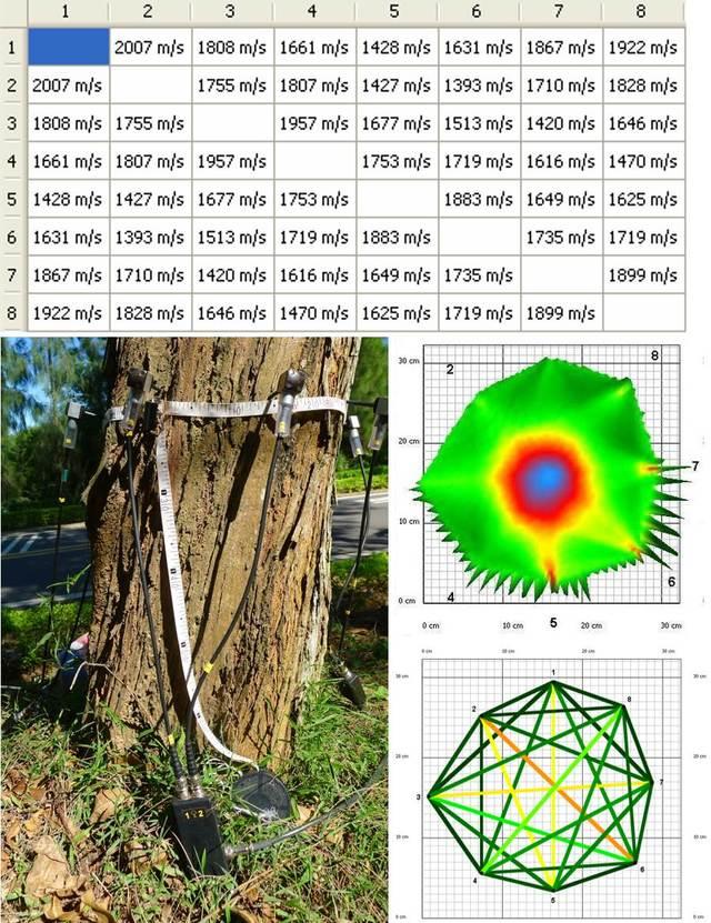 金門科技啄木鳥 找到199株危木先伐除 | 敲擊樹木檢測儀探頭,可獲得不同路徑的應力波傳遞時間,經電腦演算,可以推測樹木中空腐朽的程度。