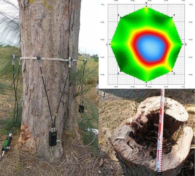金門科技啄木鳥 找到199株危木先伐除 | 經科技啄木鳥探測的空洞比率,與實際的結果相當吻合。再經誤差校正,可讓下一次的檢測更精確。