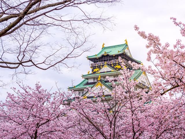 櫻浪來襲! 日本賞櫻花期出爐3地點成熱搜 | 以熱搜前3名的城市來看,3月底到4月初的中位數票價最高。(易遊網提供)