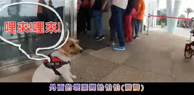台中警犬隊慶周年!領犬員搞創意KUSO影片 | 影片將警犬值勤模樣拍下來 讓人直呼好可愛(翻攝自youtube)
