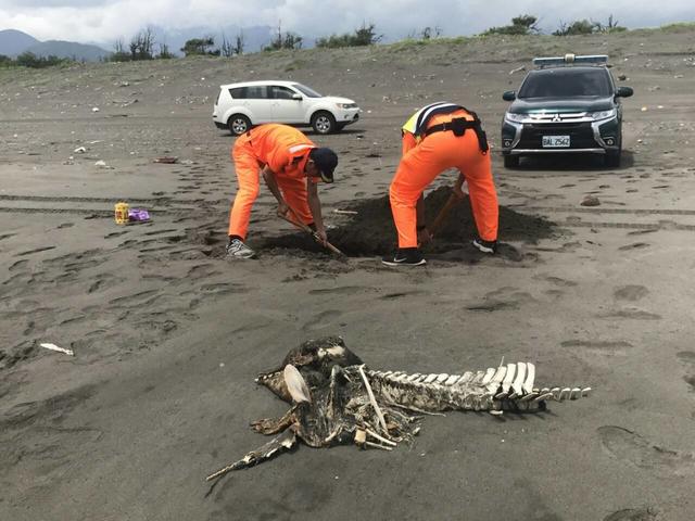又有鯨豚擱淺?宜蘭發現爛鯨豚屍體 | 海巡署第一岸巡隊接獲通報到場處理(海巡署提供)