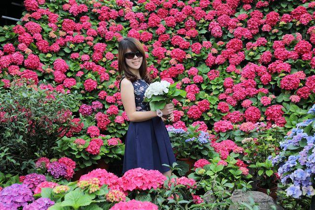 網美來這拍!竹子湖繡球花季18日登場  