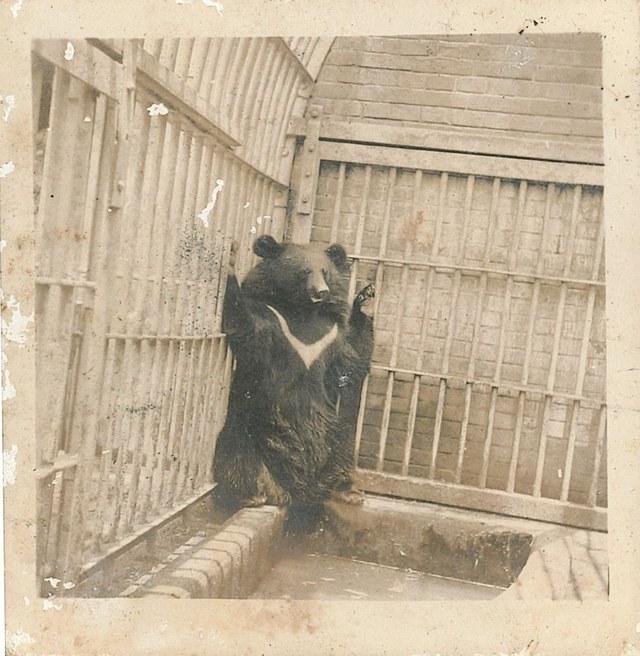 阿嬤黑熊照片(圖/翻攝自花蓮縣牛犁社區交流協會)