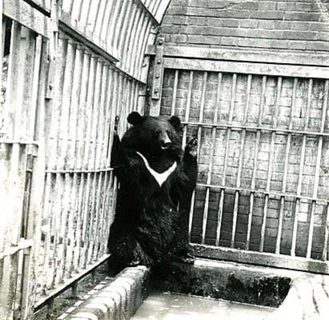 動物園黑熊照片(圖/翻攝自北投虹燁工作室)