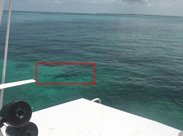 女大生琳賽去巴哈馬玫瑰島(Rose Island)浮潛,沒多久竟然就遭鯊魚攻擊致死。(翻攝自Avery Holton推特)
