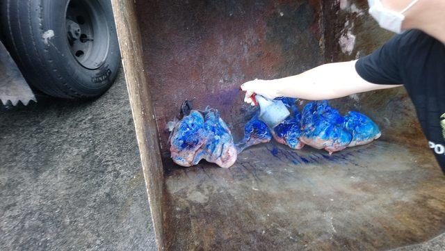 市場爆禽流感病情 14感染雞隻全數銷毀   14隻受到感染的雞隻已經全部送化製處理。(動保處提供)