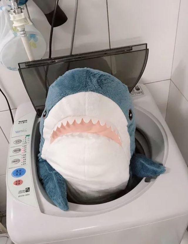 鯊魚被丟進洗衣機裡,表情相當逗趣。(翻攝DCARD)