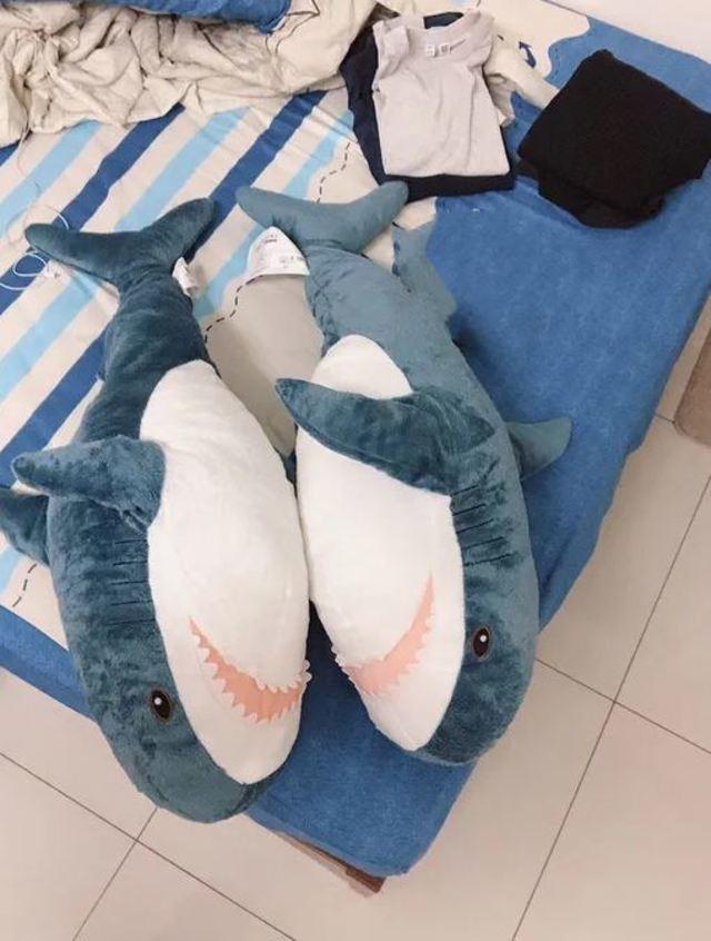 兩隻鯊魚好來好去。(翻攝DCARD)