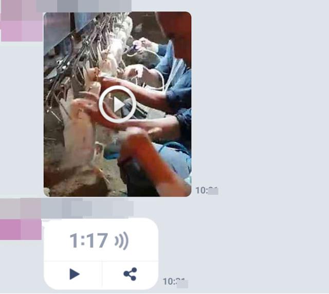 Line近來謠傳影片「1隻雞打4種抗生素」。