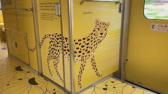 觀光局耗資300萬元打造的集集彩繪列車,車廂內的石虎看起來卻像花豹