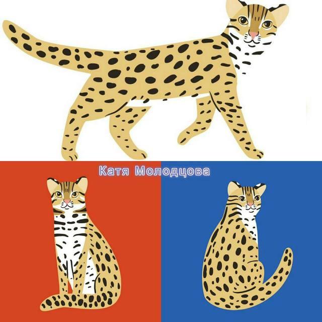 Катя Молодцова親筆畫了3隻Q版石虎,讓台灣民眾及保育團體免費使用。