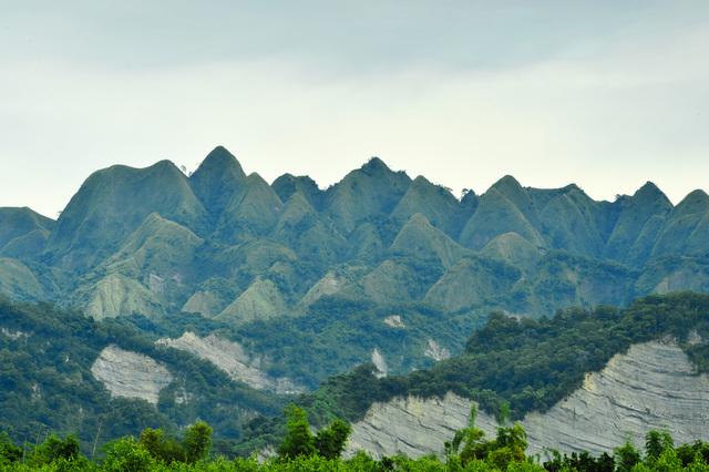 921地震20週年前 石虎再現九九峰! | 九九峰自然保留區。(南投林管處提供)