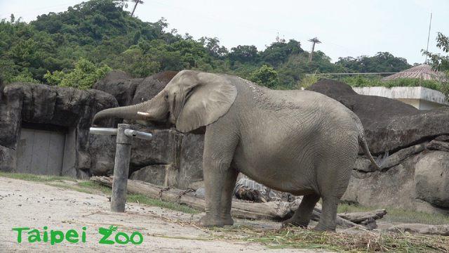 (動物園提供)