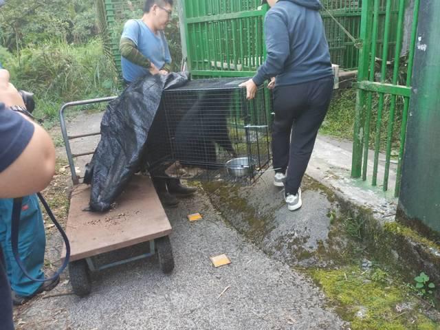 兩隻小熊在今日移到特生中心低海拔試驗站照養。