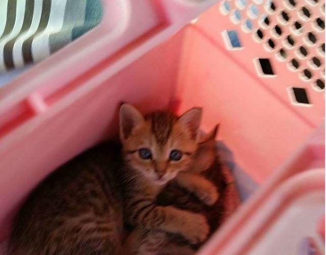 放養貓貼傳單「找新主人」遭罰3萬 飼主不服興訟勝訴   貓咪示意圖。(資料照片)