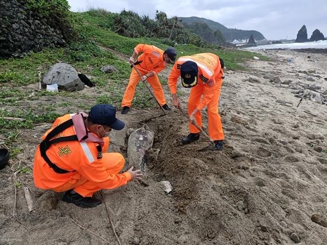綠島出現小虎鯨屍體 海巡採樣後就地掩埋 | (海巡提供)