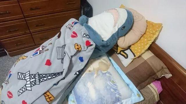 網友貼出鯊魚睡覺照,萌翻了。(翻攝DCARD)