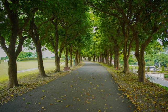 宜蘭縣雙園自行車道。