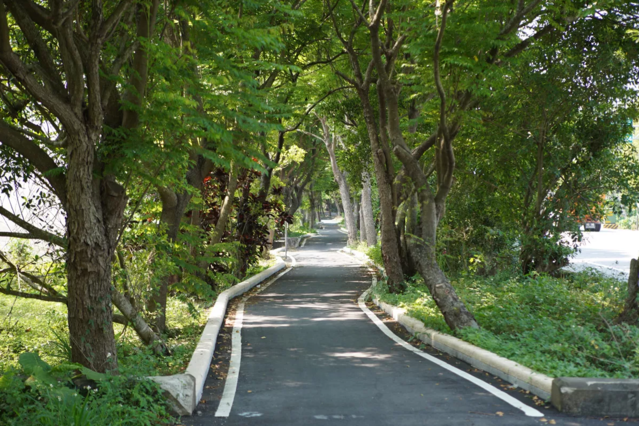 南投縣名間鄉波蘿水綠隧自行車道。