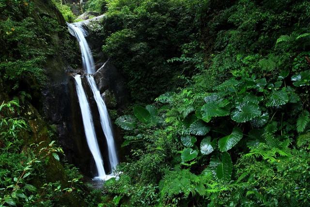 疫情減緩! 國家森林遊樂區入園人數限制解除 | (林務局提供)
