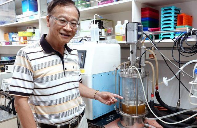 廢物變黃金!中正大學回收鳳梨皮渣升級木寡糖 | 中正團隊加入獨創的專利酵素進行反應,將鳳梨皮的半纖維素轉化成木寡糖。(中正大學提供)