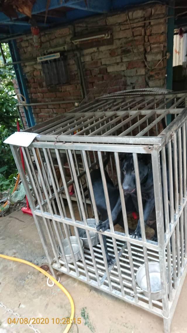 犬隻隔著鐵欄杆渴望探索籠外的世界。(台北市動保處提供)