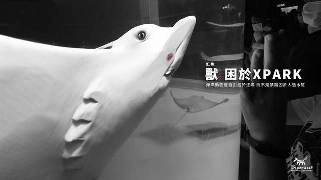 (取自台灣動物平權協會TAEA)